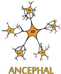 ancephal